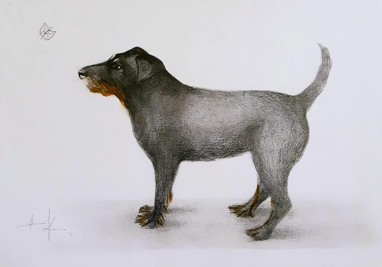 Kunnas Dog 2020