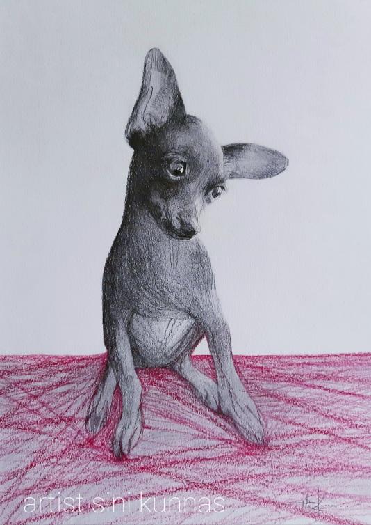 Kunnas Dog 2020 7